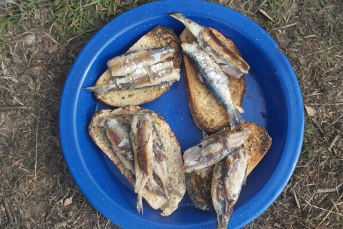 Fresh sardines on toast… just waiting for a splash of home made tomato sauce