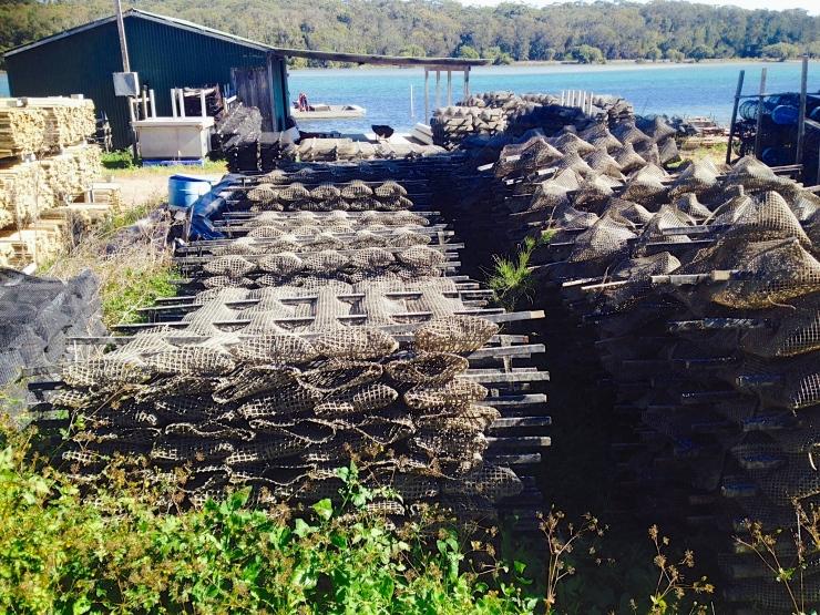 Wooli Oyster Farm
