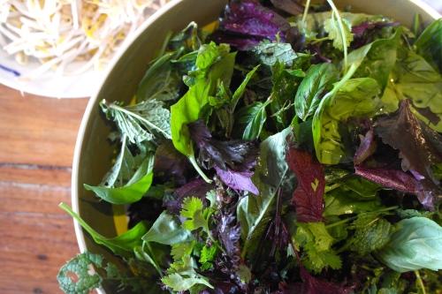 Herbs. Heaps of herbs